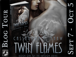 Review of the Sizzling Paranormal Romance Novel, TwinFlames