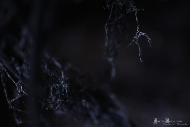 06Bloodless