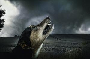dog-183288_960_720